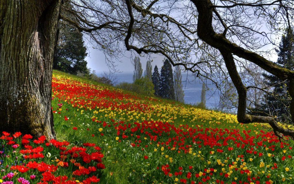 1680_Field of Flowers