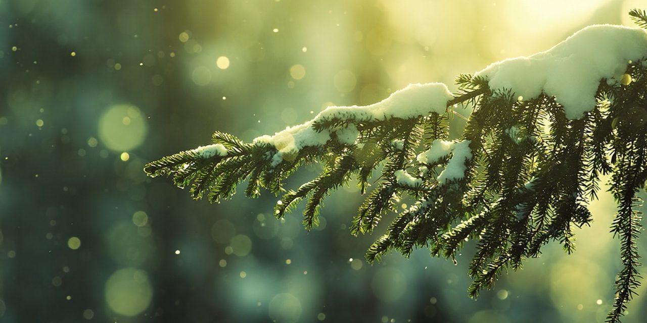 Immunité : Comment survivre en Open Space en hiver ?